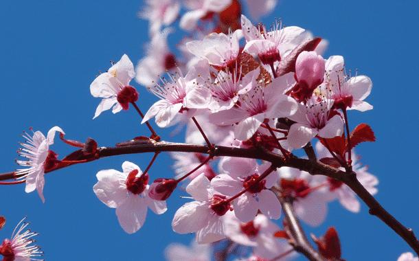OGV Burgebrach lädt zum Obstbaumschnittkurs ein