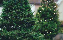 Gewinne einen Weihnachtsbaum fürs Weihnachtsfest