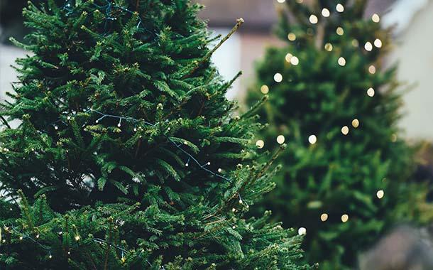 Gewinne einen Weihnachtsbaum fürs Weihnachtsfest 2019