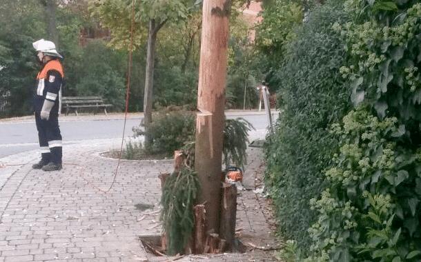 Zeugen gesucht: Kerwasbaum in Stappenbach angesägt