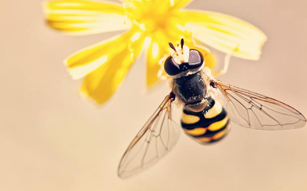 Wissenswertes rund um die Bienen und die Imkerei