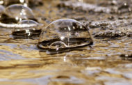 Beim Bewässern auch an den Gewässerschutz denken