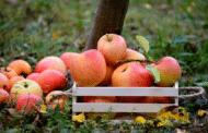 Kinderprogramm des Obst- und Gartenbauvereins Burgebrach im April 2019