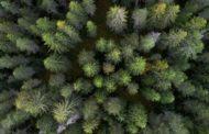 Walderlebnis- und Gesundheitsparcour für Burgebrach
